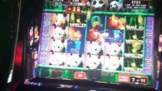 Giant Panda (Aruze) - Max Bet Bonus Huge Big Win!