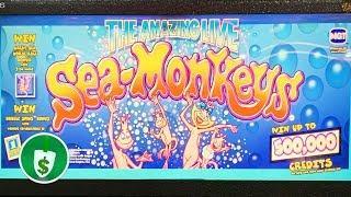 The Amazing Live Sea Monkeys slot machine, bonus