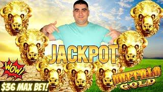 High Limit BUFFALO GOLD Slot Machine HANDPAY JACKPOT - $36 Max Bet Bonus | Live High Limit Slot Play