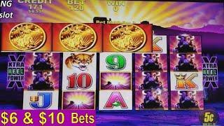 Buffalo Slot Machine Bonus •BIG WIN• and •BUFFALO HUGE LINE•! Live Aristocrat Slot Play w/Big Win