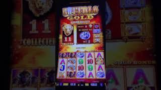 Buffalo gold jackpot MAX BET HANDPAY
