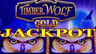 ⋆ Slots ⋆HANDPAY AGAIN ! JACKPOT ! TIMBER WOLF GOLD Slot⋆ Slots ⋆ HAPPY WOLVES !⋆ Slots ⋆$375 Free Play⋆ Slots ⋆$6.00 Bet /栗スロ