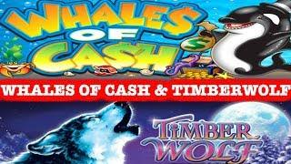 • WHALES OF CASH • TIMBERWOLF DELUXE • BONUS • LIVE PLAY • MAX BET SLOT PLAY •