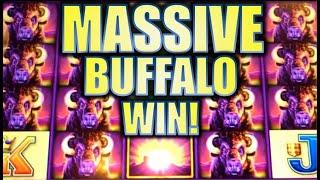 •MASSIVE BUFFALO WIN!• HUGE STAMPEDE ON WONDER 4 BUFFALO Slot Machine Bonus (Aristocrat)