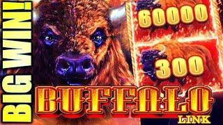 HUGE BUFFALO BALL!! BETTER THAN A MAJOR JACKPOT!! BUFFALO LINK Slot Machine (Aristocrat)(Aristocrat)